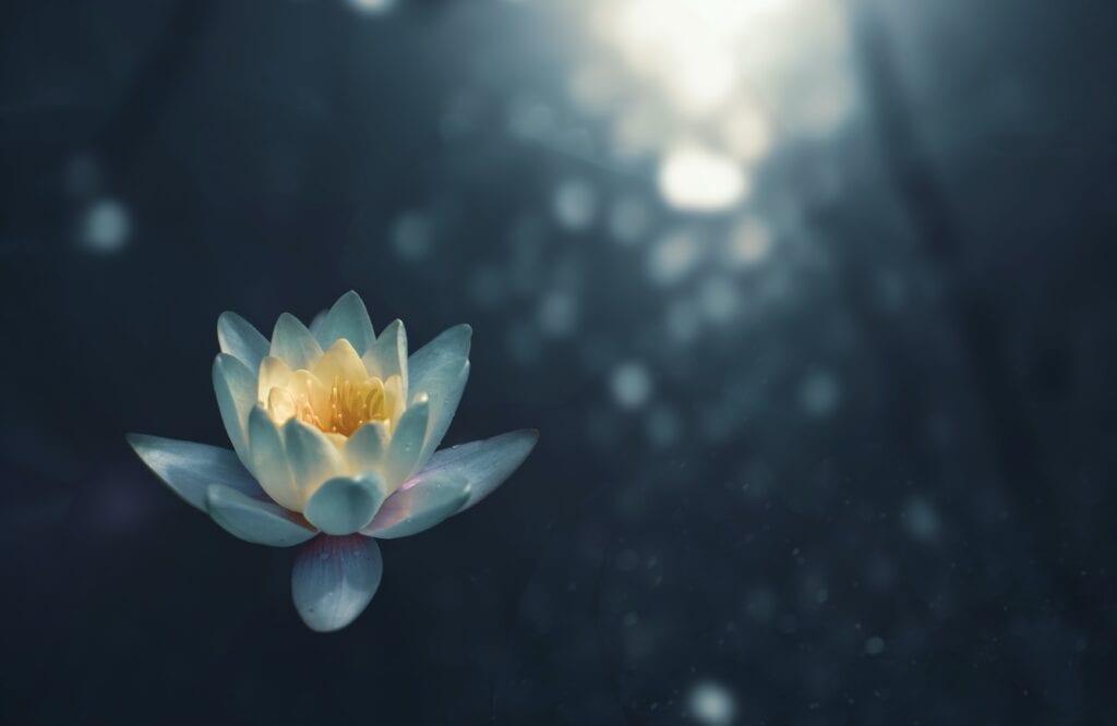 Yoga: Yogaens åtte ulike ledd