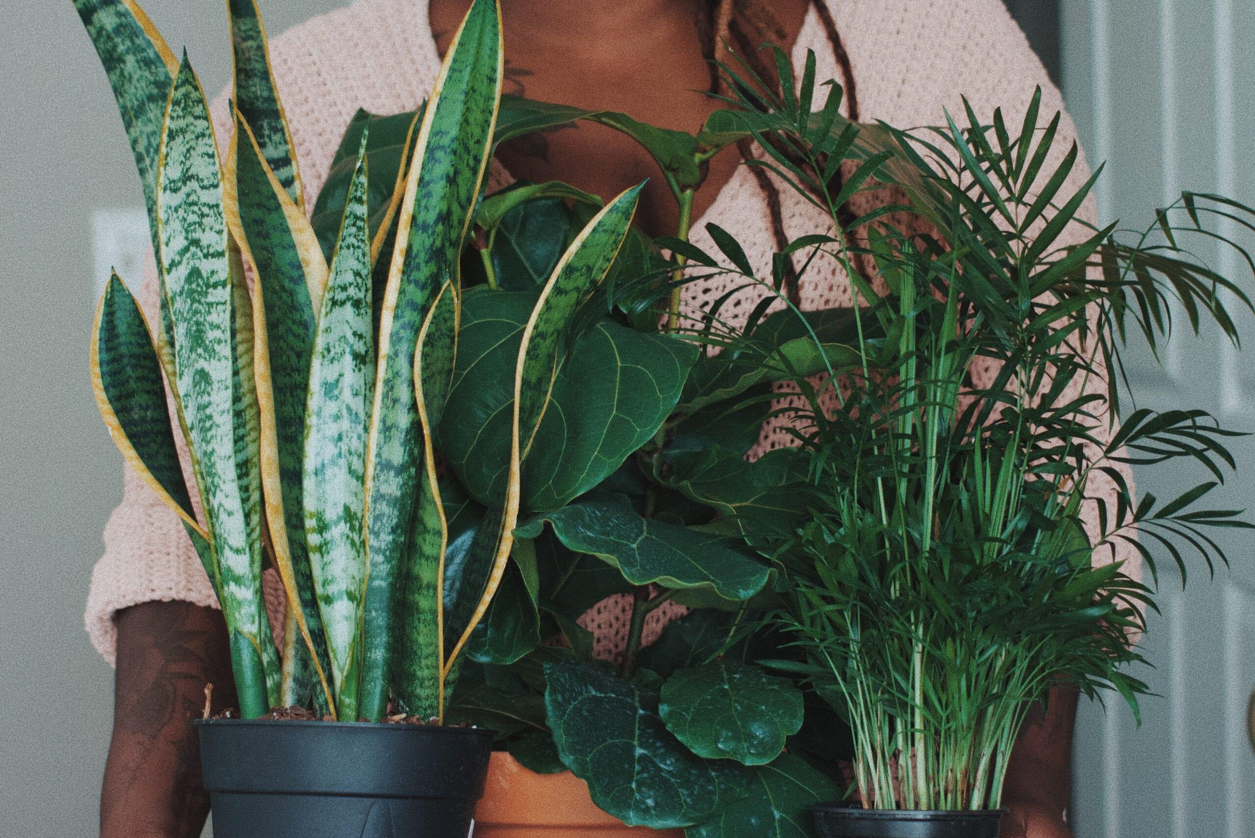 Grønne planter for et sunnere hjem